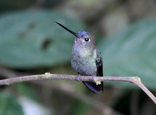 Google Hummingbird: el algoritmo Colibrí